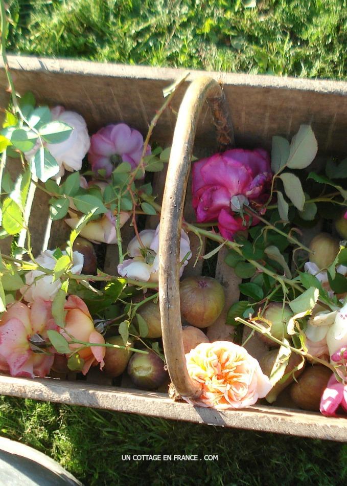 Roses et figues, blog maison de campagne