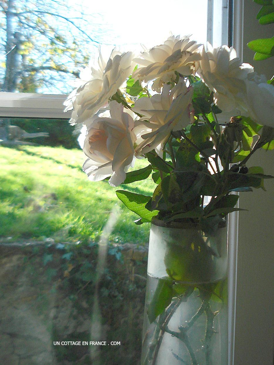 Paresse d'un bouquet de ROSES BLANCHES au coin de la fenêtre (A lazy WHITE ROSES bouquet in the window corner)