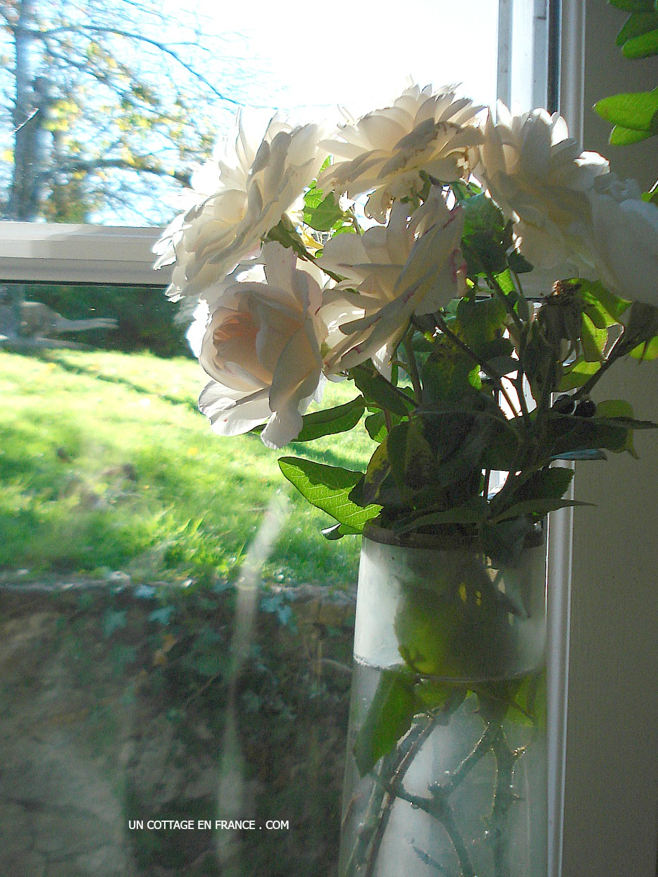 Paresse d'un bouquet de ROSES BLANCHES au coin de la fenêtre (A lazy WHITE ROSES bouquet in the window corner)