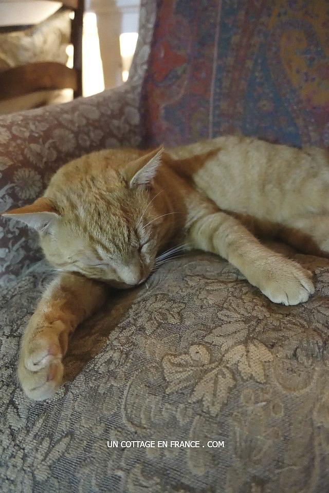 Isidore se repose de ses blessures de combat -