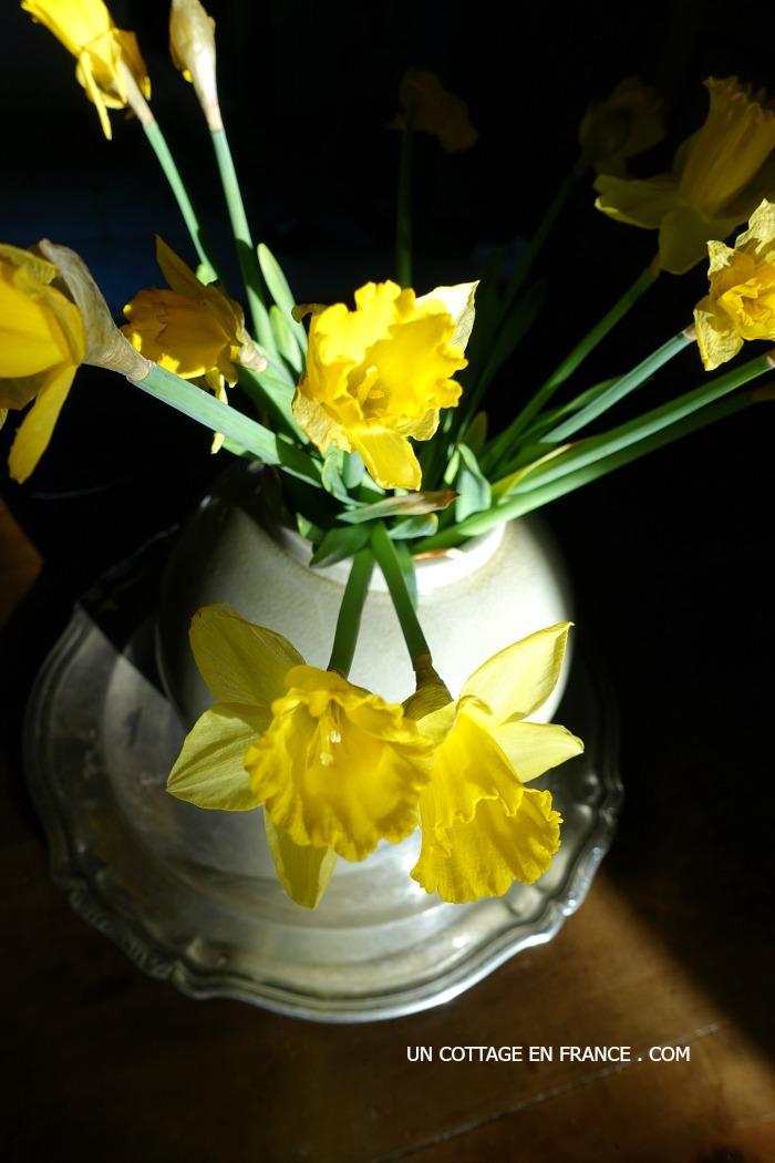 Joncquilles - Daffodills rustiques