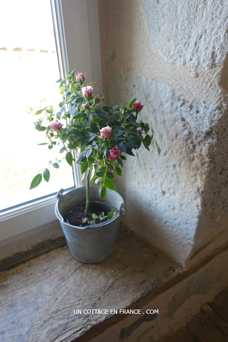 Un MINI ROSIER dans la salle de bain (A mini rosetree in the bathroom)