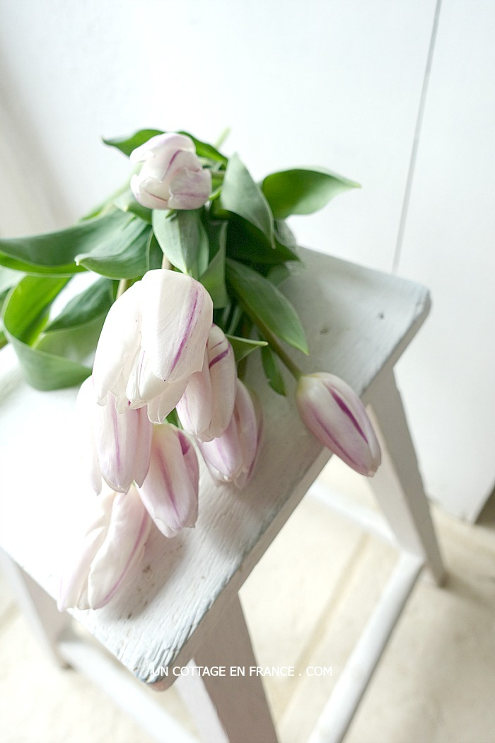 les tulipes rose pâle 2