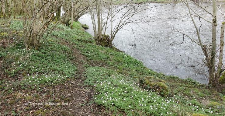 Les perce neige du bord de la rivière, Le petit Confolens