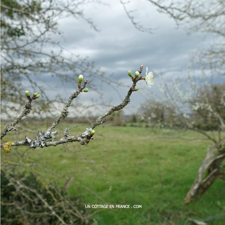 Début du printemps en Haut Limousin 3