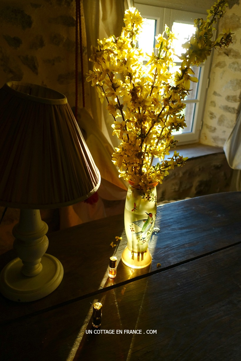 Bouquet de Forsythias