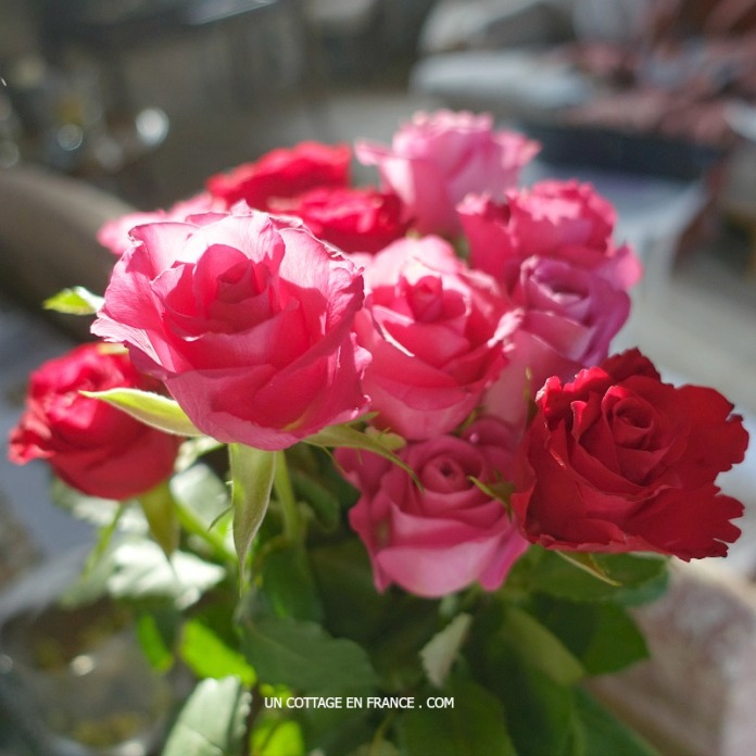 Red and pink cottage roses