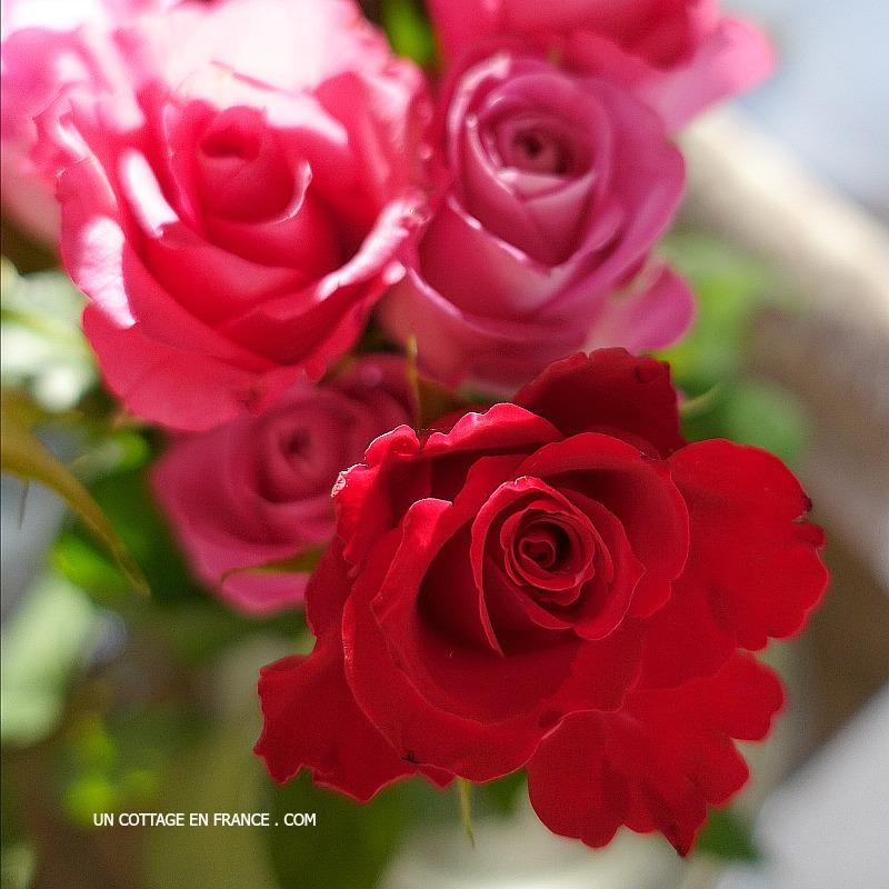 Roses rouges - un cottage en france