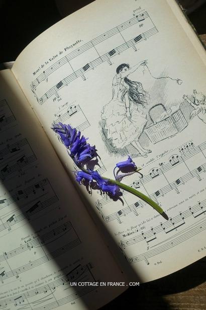 jacinthe des bois, spanish bluebells