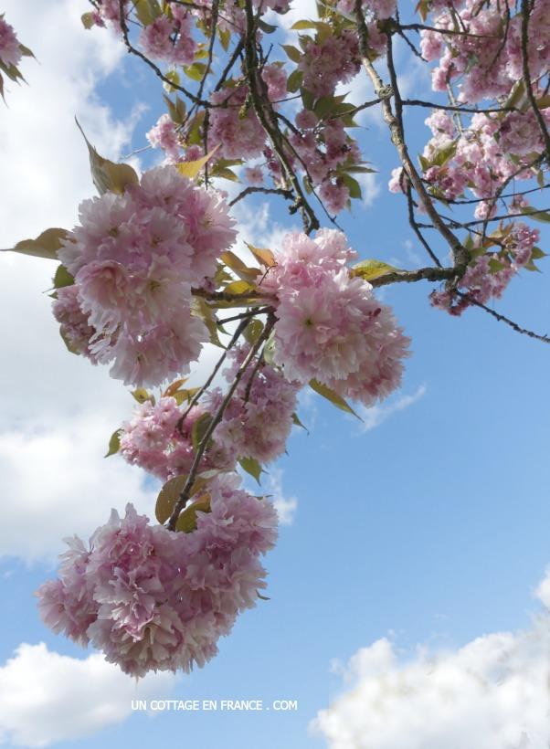 Blog campagne chic - les floraisons de printemps