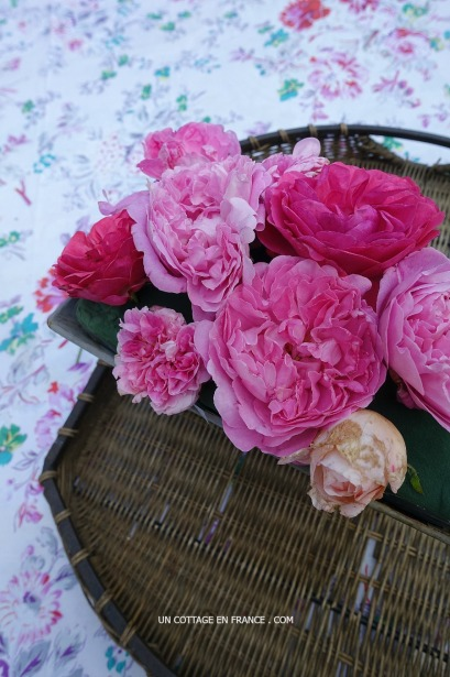 Roses de mai shabby chic, blog shabby chic rustique chic