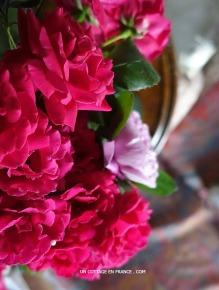 Roses du cottage du printemps pluvieux 2016 - blog décoration romantique