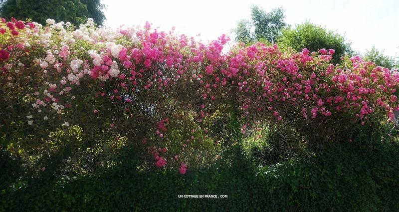 les-rosiers-de-blond-blog-campagne-et-decoration-1s