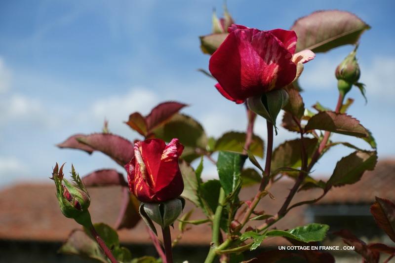 blog maison et jardin