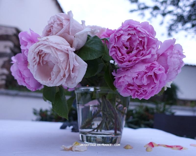 Le reste des roses en fin de journée (The remaining roses at the end of the day)