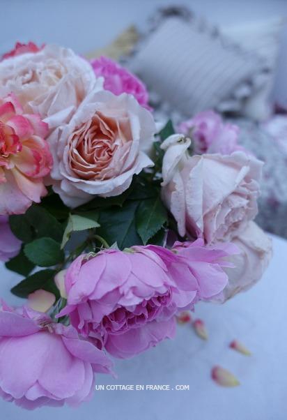 roses-anglaises-du-jardin-un-cottage-en-france