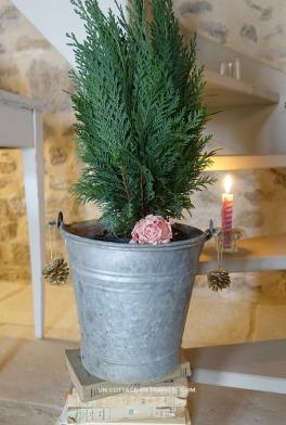 cypres-arbre-de-noel-un-cottage-en-france