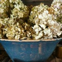 Saveurs tradi : de la lande l'hiver... à la recette du beurre persillé | Hearty: from pastures in winter... to a garlic butter recipe