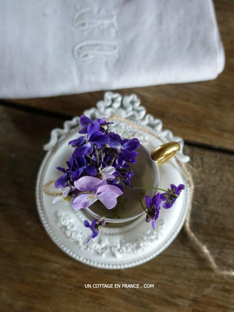 violets' arrangement
