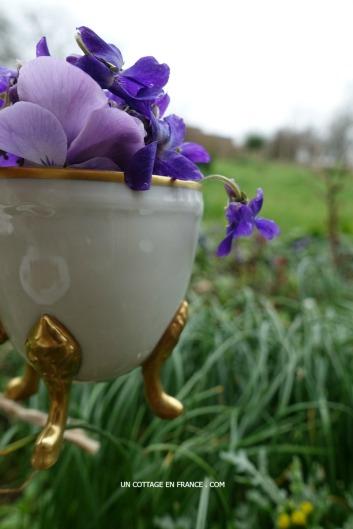 styling violets