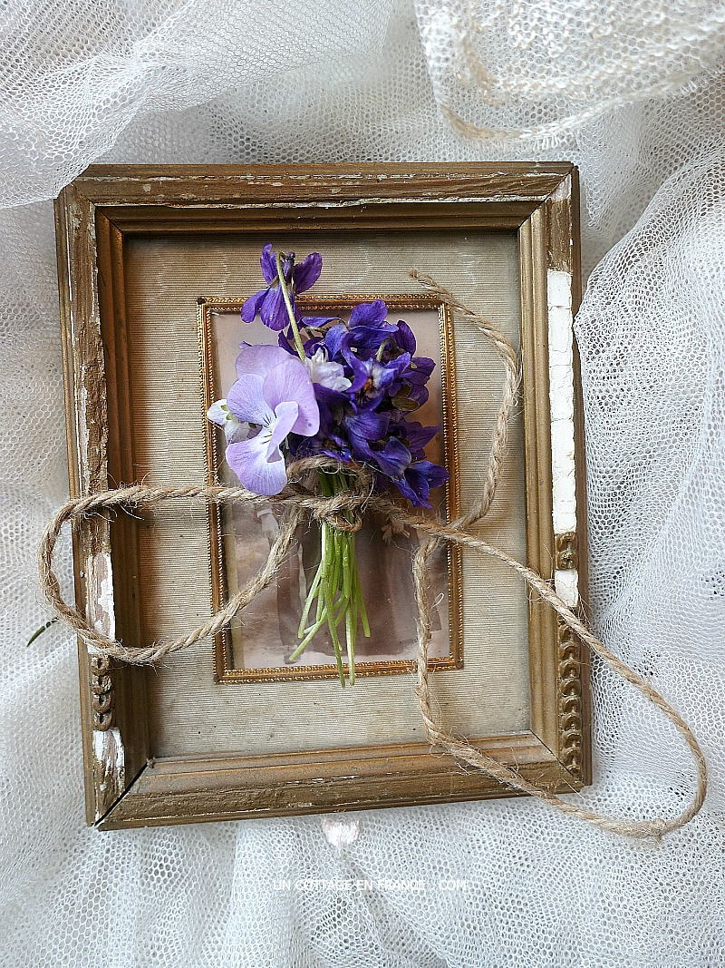 vase de violettes