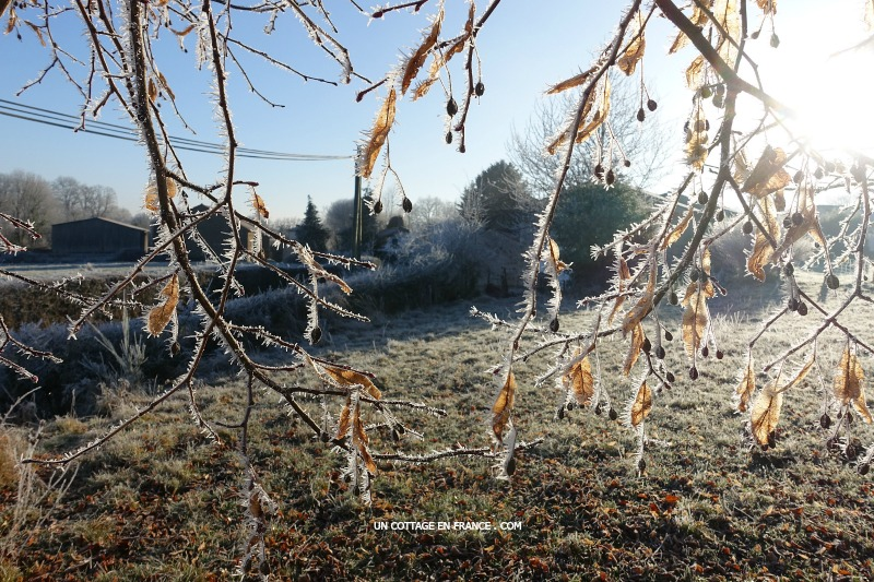 Haut Limousin en janvier