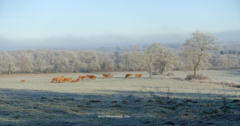Les couleurs de janvier en Limousin (The January colours in Limousin)