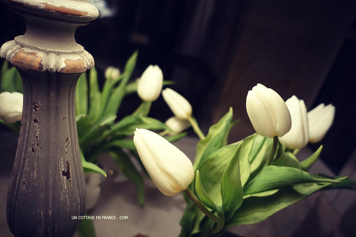 les-tulipes-blanches-bouquet-pastel-de-janvier-au-cottage-12-intr