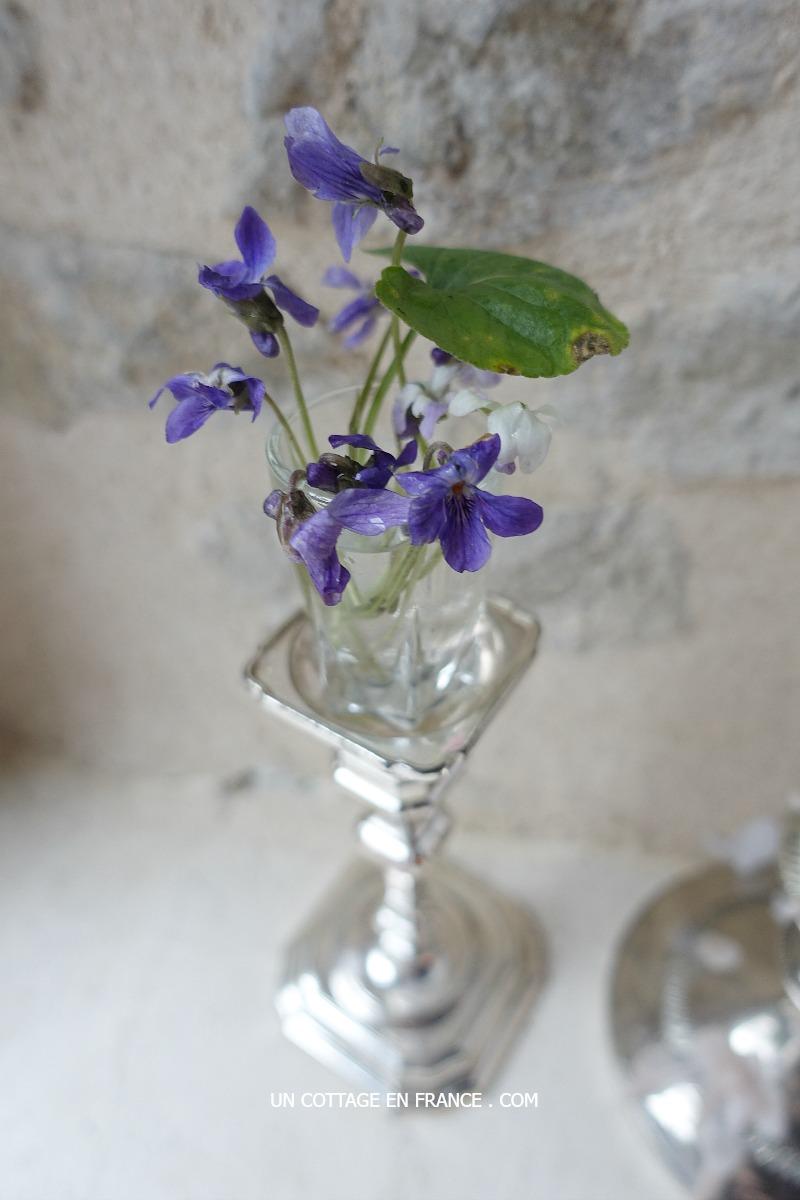 violettes-de-janvier-blog-campagne-chic-un-cottage-en-france-c2