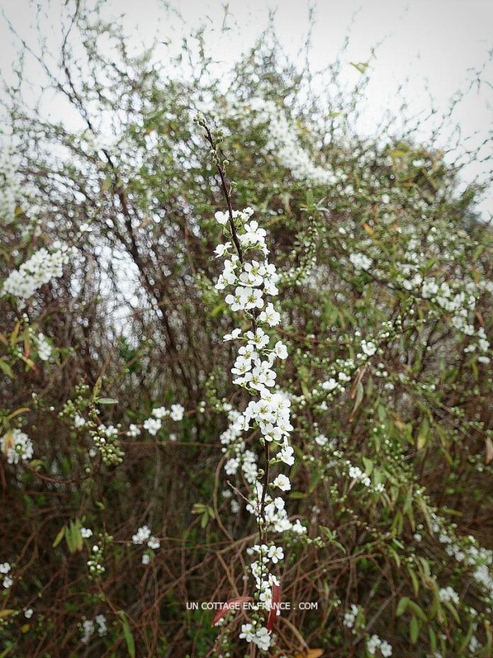 bouquet de février mars
