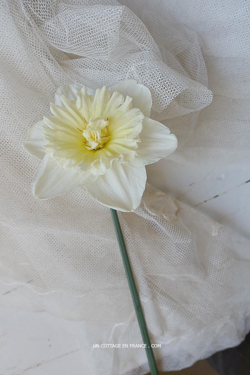 Jonquille et violettes, ça marche par étages (Daffodils and violets are a good match on different tiers)