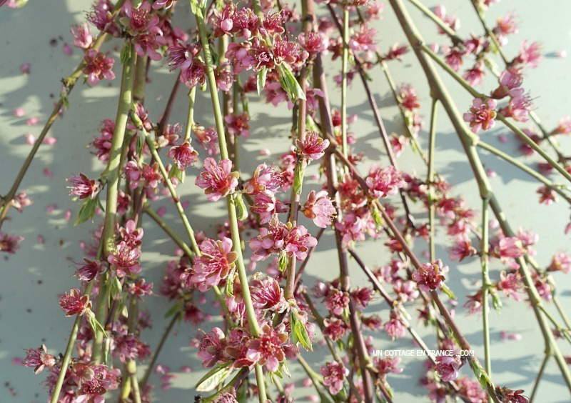 Le bouquet de mars avril avec les branches de pêcher, blog vivre à la campagne 1cc