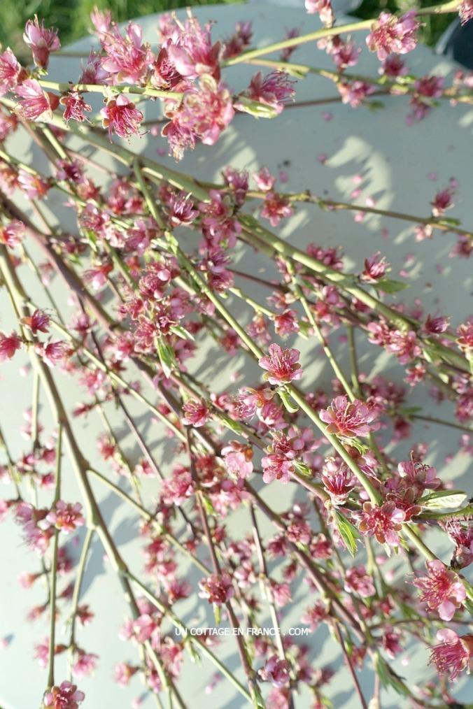 Le bouquet de mars avril avec les branches de pêcher, blog vivre à la campagne 2c