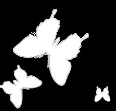 papillons bleus bl 5