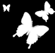 papillons bleus bl