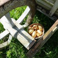 Chasse aux oeufs : qui les trouve les mange...! | Easter eggs hunt: who finds them eats them...!