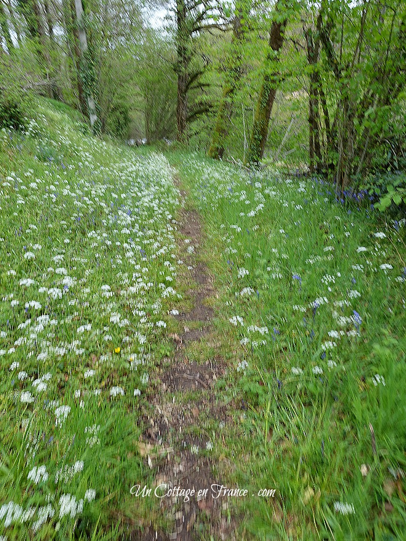 Le chemin de la Gartempe en mai (The path net to the Gartemper river in May)