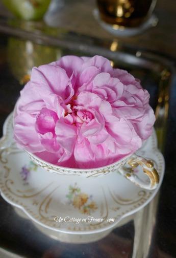 Rose cottage dans une tasse de porcelaine de Limoges ancienne c