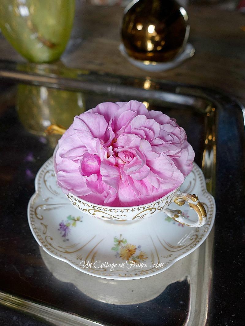 Rose cottage dans une tasse de porcelaine de Limoges ancienne c1