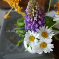 Petit bouquet : cottage au printemps | Pocket bouquet: spring at the cottage