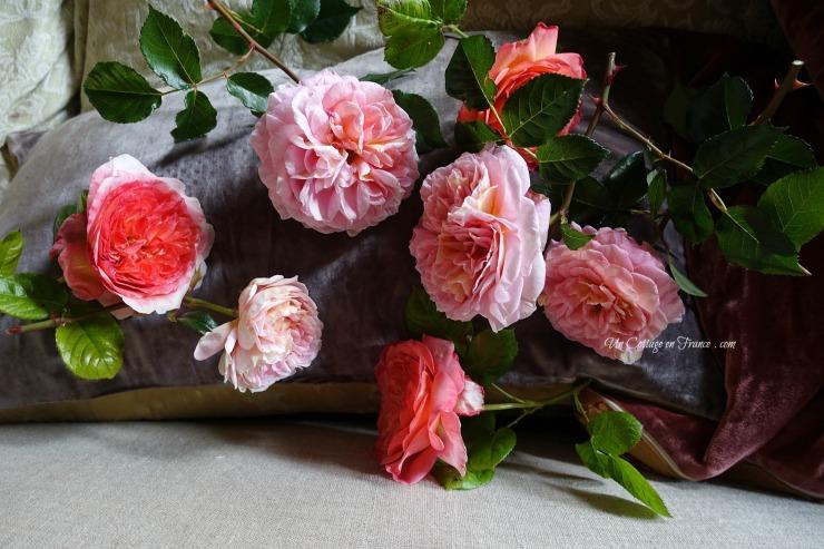 Blog sur les roses
