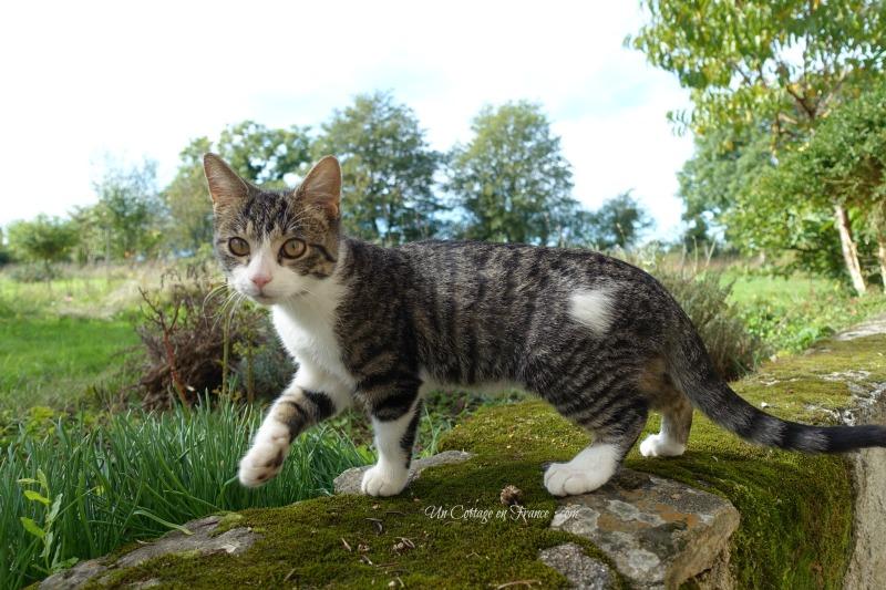 Petit chat du cottage (The cottage kitten)