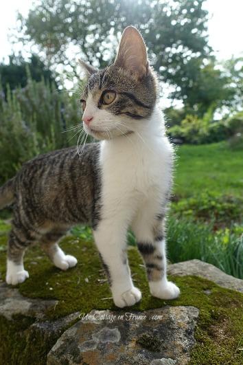 chaton cottage en france