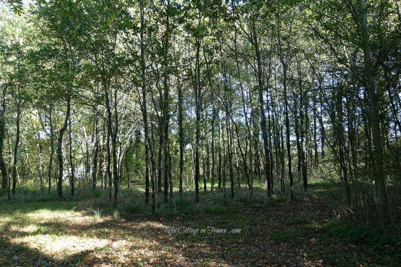 Sous bois l'automne, blog cottage chic