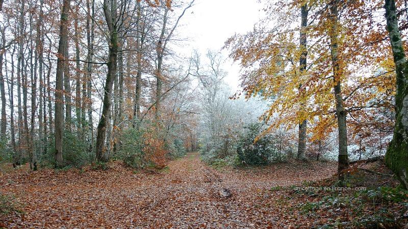 Allée d'automne en Limousin, blog cottage chic 10s