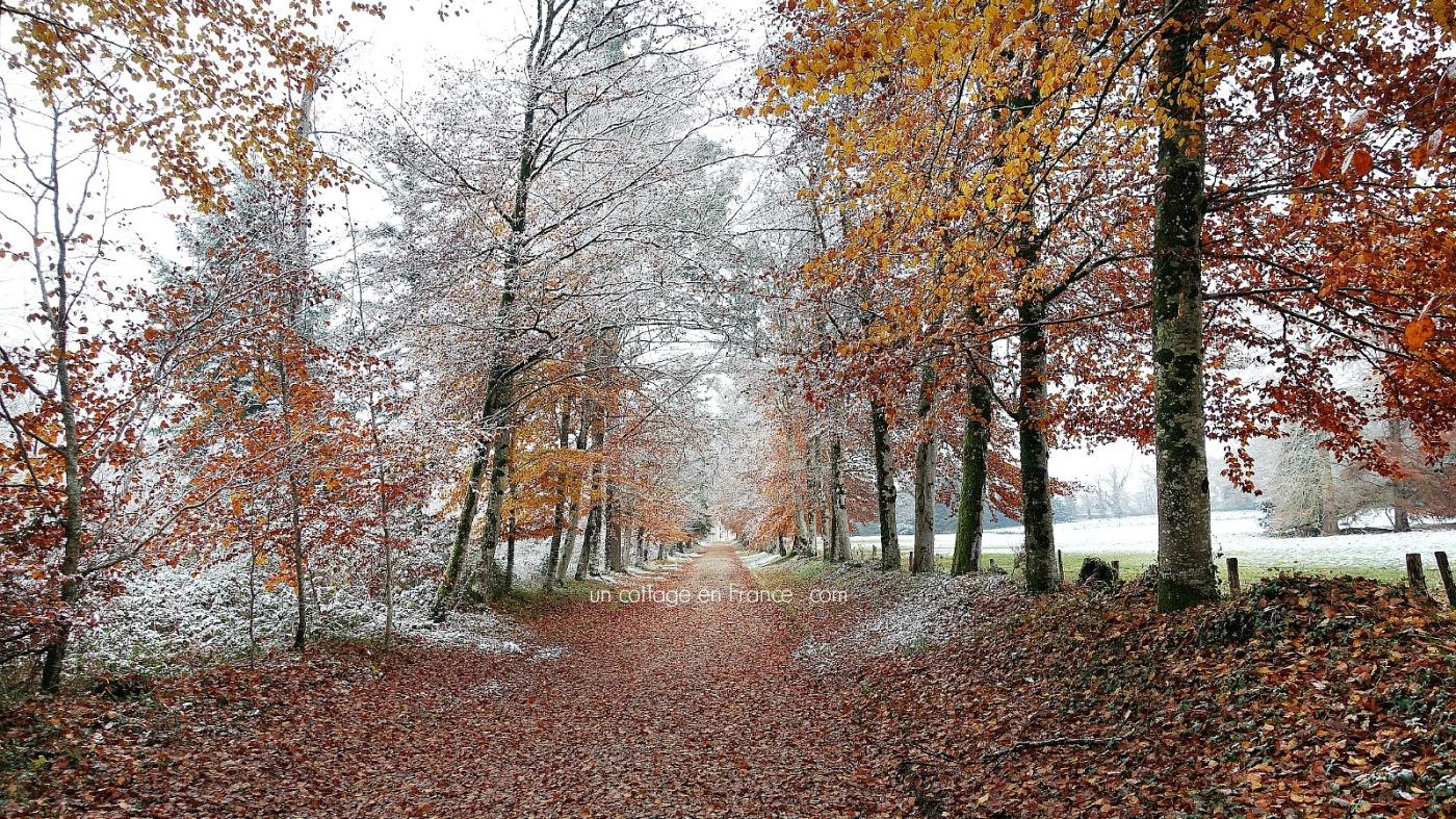 Allée d'automne en Limousin, blog cottage chic 1