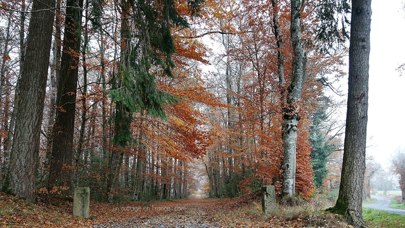 Allée d'automne en Limousin, blog cottage chic 4s