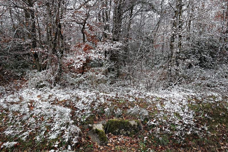 ©Colette Malpaud Allée d'automne aux Martinettes en Limousin, blog cottage chic 15s