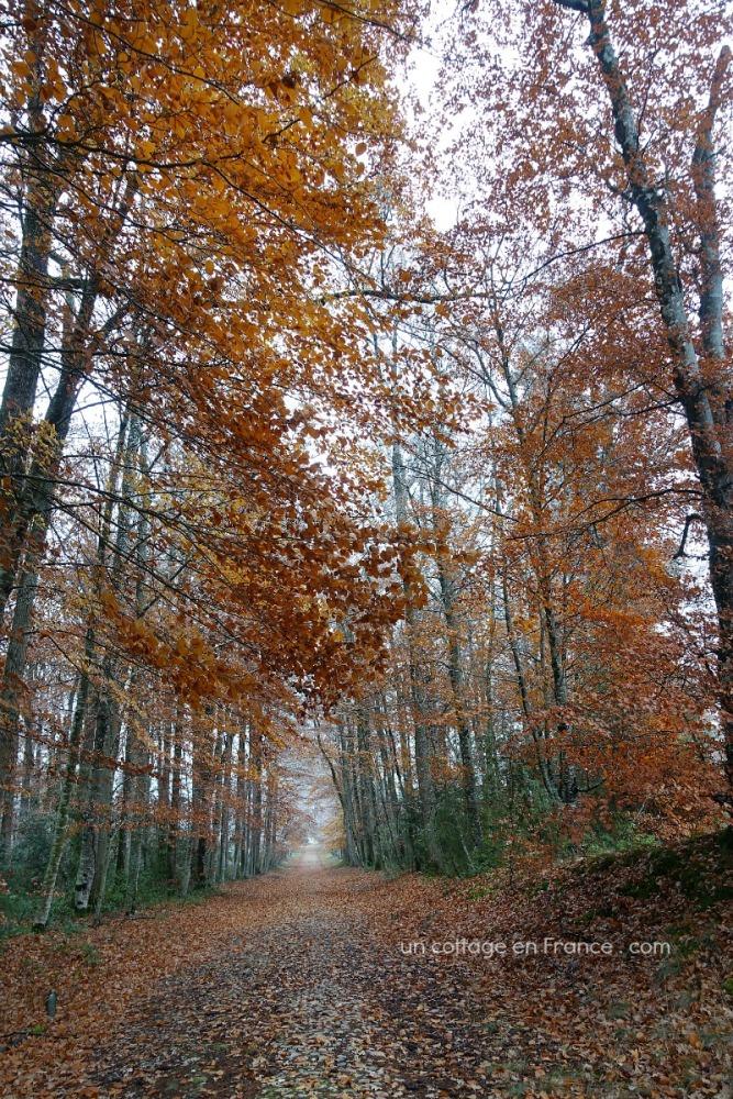 ©Colette Malpaud Allée d'automne aux Martinettes en Limousin, blog cottage chic 16