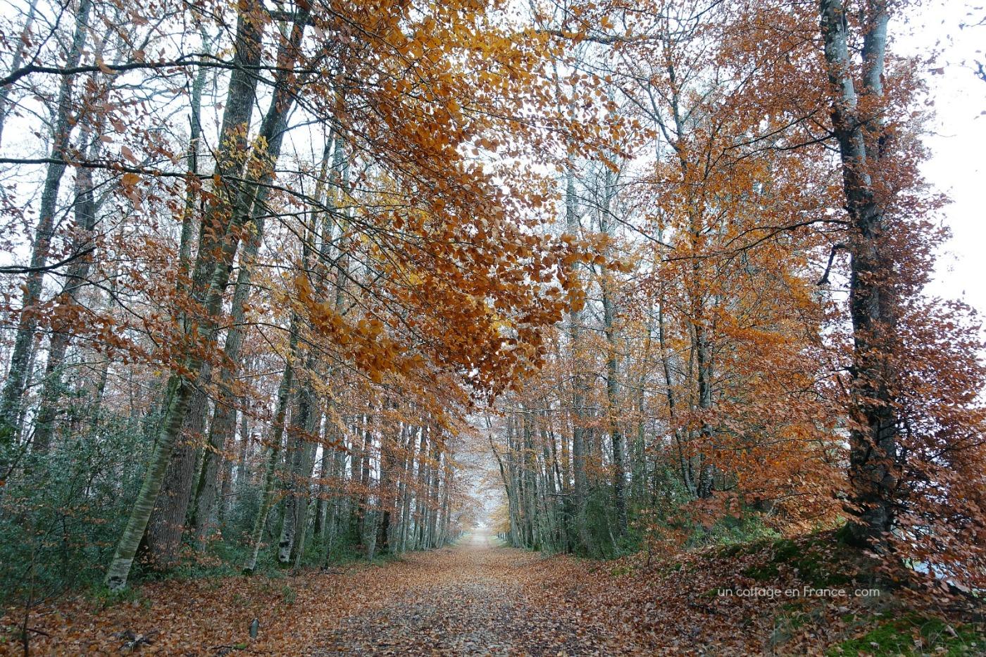 Allée d'automne aux Martinettes en Limousin